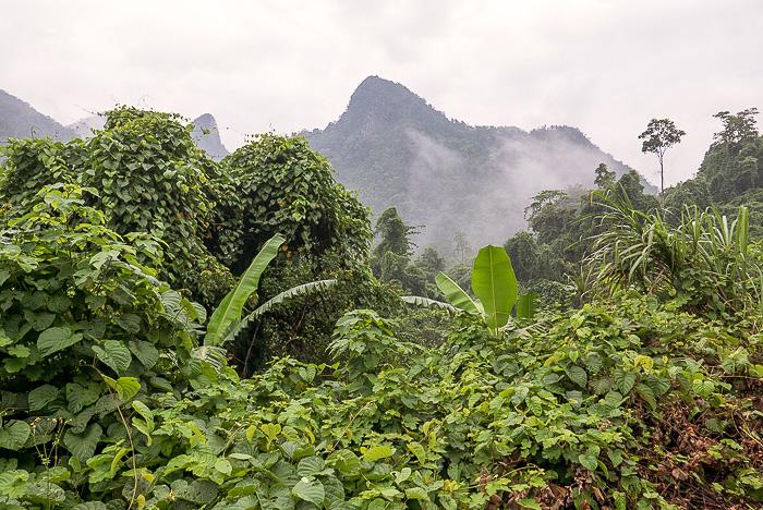 Elephant Cave Phong Nha