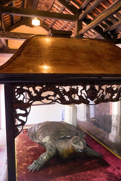 temple turtle