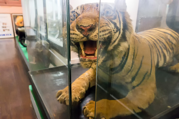 Zoological Museum